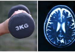 Weight lifting changes the brain structure